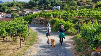 The Ribeiro Wine Tour & Nature Trail Walk in Galicia's oldest wine region