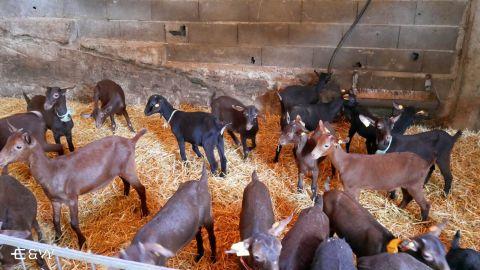 Ruta A Fraga y Visita a Granja con Degustación Queso de Cabra