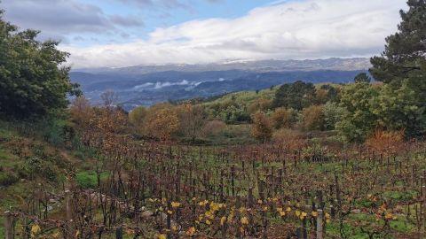 The Ribeiro Wine Tour & Nature Trail Walk